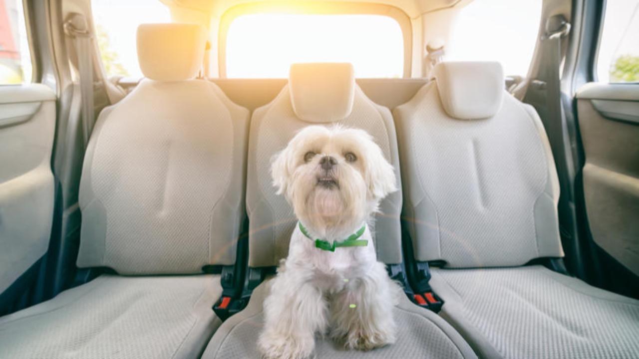 Prendre le Uber avec votre chien ? Bientôt possible !