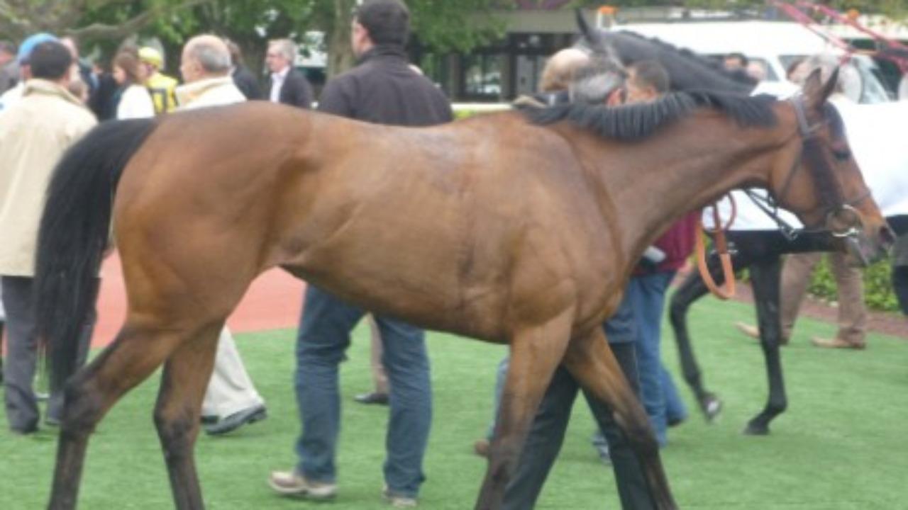 Trois chevaux retrouvés mutilés dans le Rhône