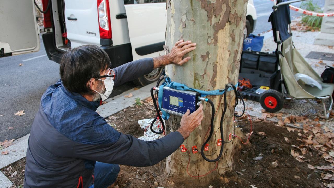 Lyon : quatre arbres abattus, victimes d'un champignon