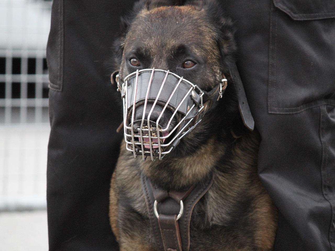 Saint-Priest : il détache la muselière du chien policier et se fait mordre