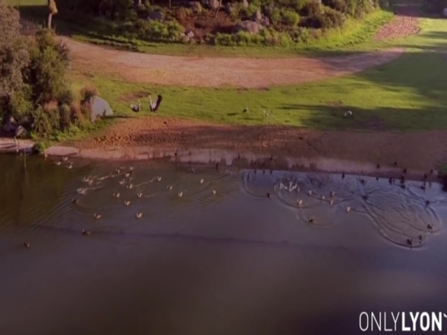 Lyon : une vidéo du parc de la Tête d'Or tournée avec un drone