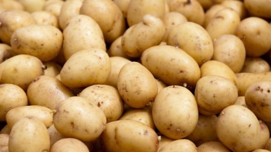 Villeurbanne : Un homme arrêté après avoir volé des pommes de terre !