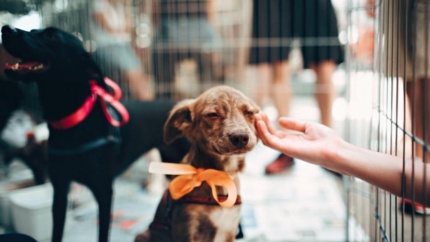 Bientôt un test à passer avant d'adopter un animal ?