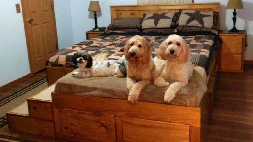 Voici le lit sur-mesure conçu pour vous et votre chien !