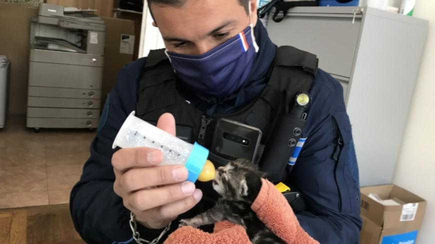 Près de Lyon : des agents municipaux adoptent un chaton abandonné par sa mère !