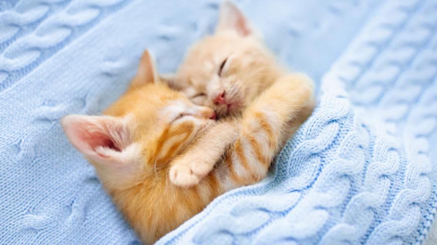 Une étude affirme que regarder des vidéos d'animaux mignons réduit le stress !
