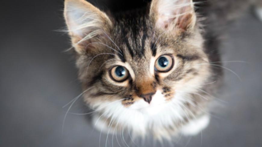 Les gens qui préfèrent les chats aux chiens seraient plus intelligents