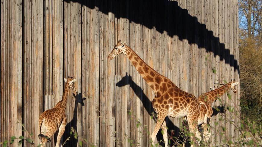 Lyon : le pass sanitaire désormais obligatoire pour aller au zoo du parc de la Tête d'Or