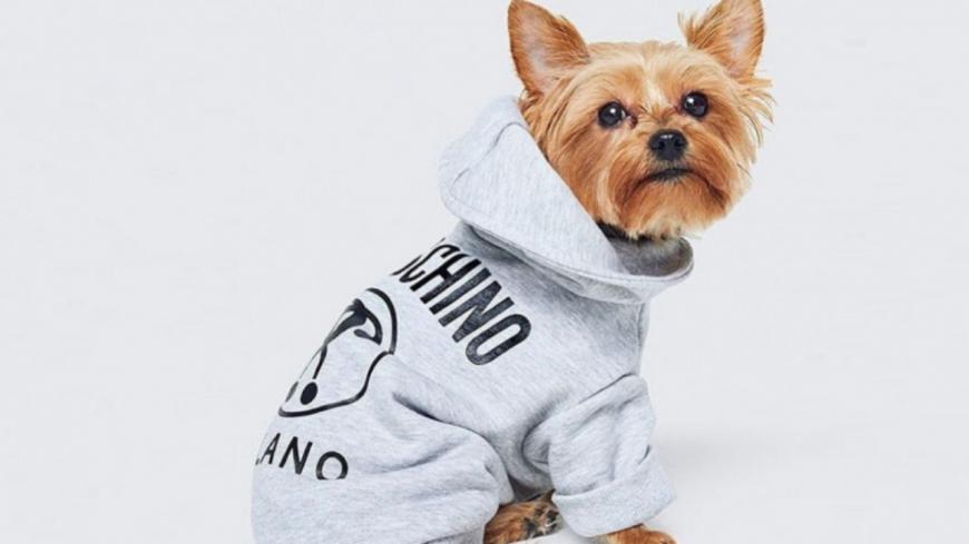 H&M sort une collection de vêtements…pour chiens !