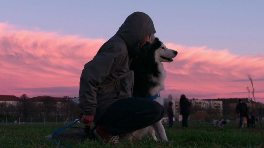 Dogs : La nouvelle série Netflix sur les chiens !