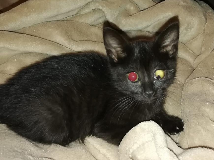 Rhône : un chaton retrouvé blessé et criblé de plombs