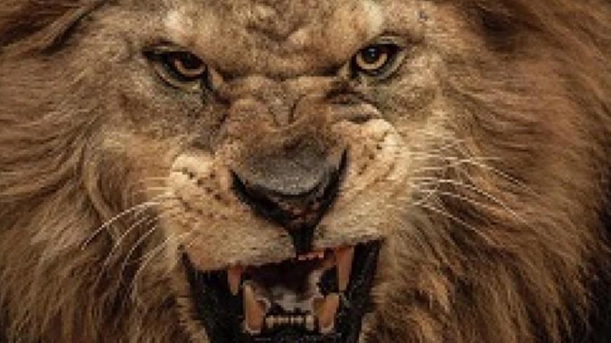 Acte 2 ! Denis est rentré dans la cage aux lions !