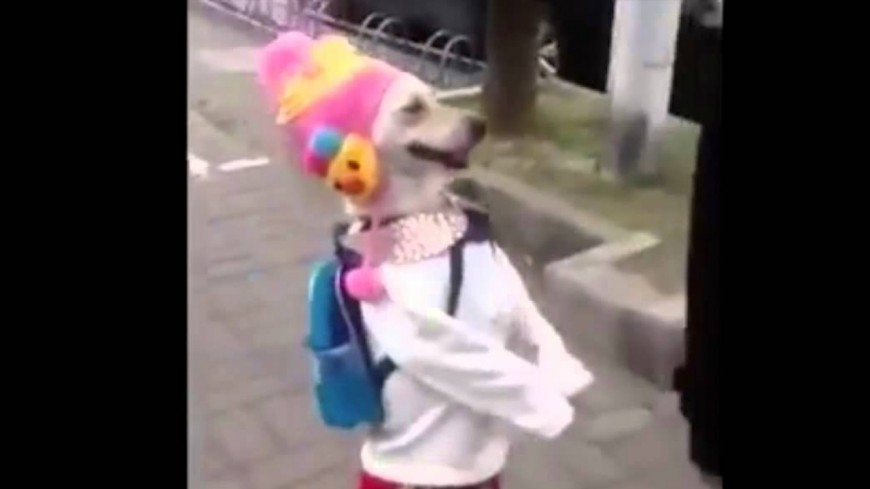 Habillé, ce chien marche comme nous dans la rue